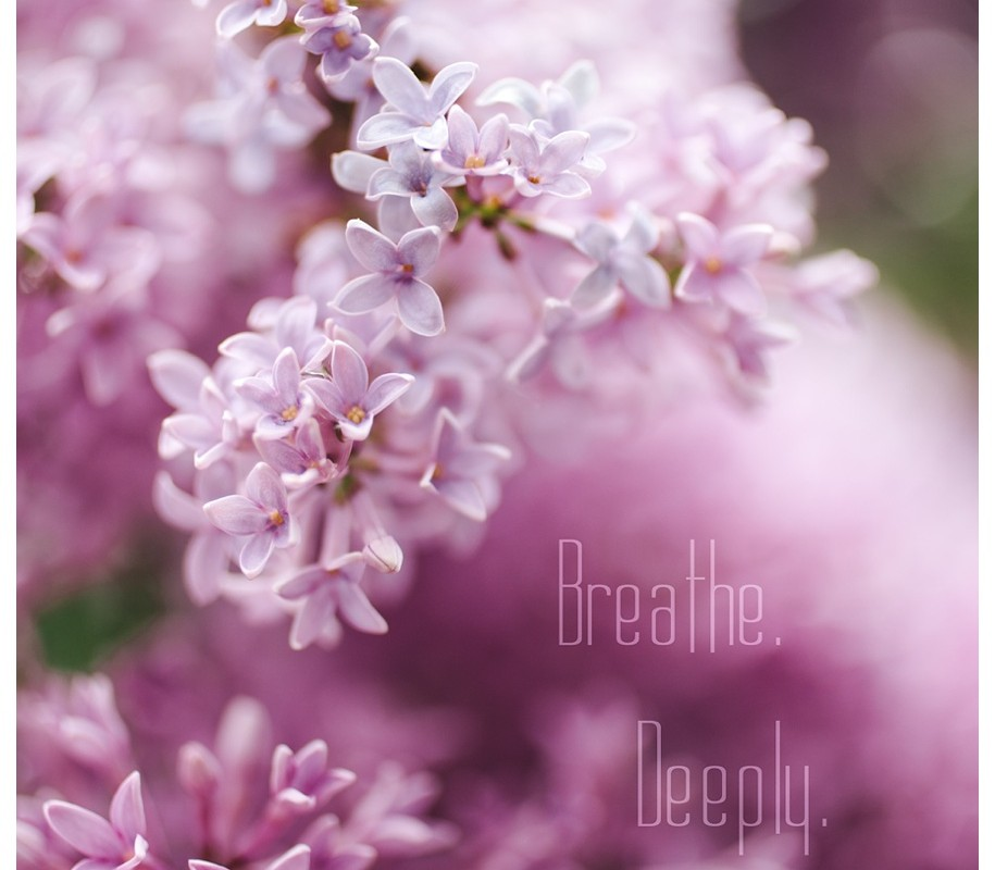 Breathing Deeply and Smelling the Lilacs – {Spring in Missoula}