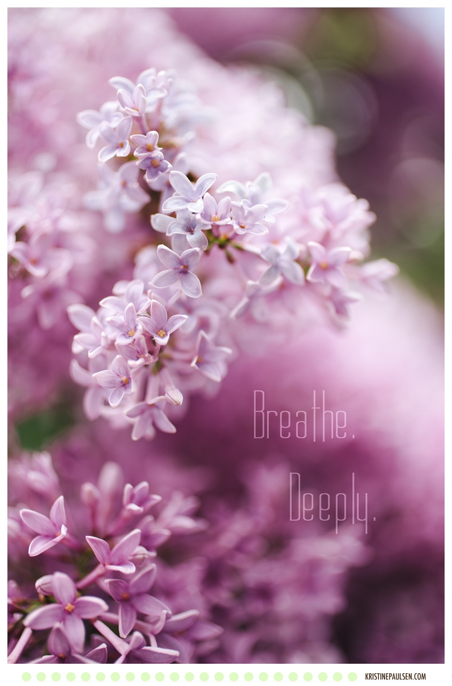 Breathe in Deeply the Scent of Lilacs - Photo by Kristine Paulsen Photography, Missoula, Montana Photographer