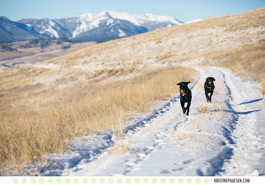 Mountain Running :: {Lolo and Trapper's Missoula Pet Portraits}