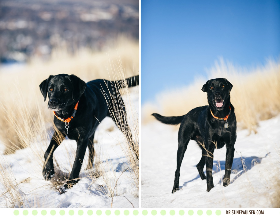 Montana Mountain Running :: Lolo and Trapper's Missoula Dog Portraits - Photos by Kristine Paulsen Photography