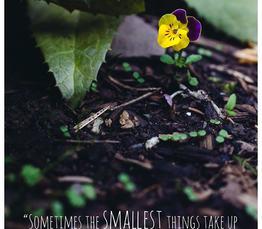 The Smallest Things – {Missoula Springtime Flowers}
